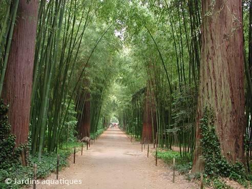 Les Jardins aquatiques - Bambouseraie