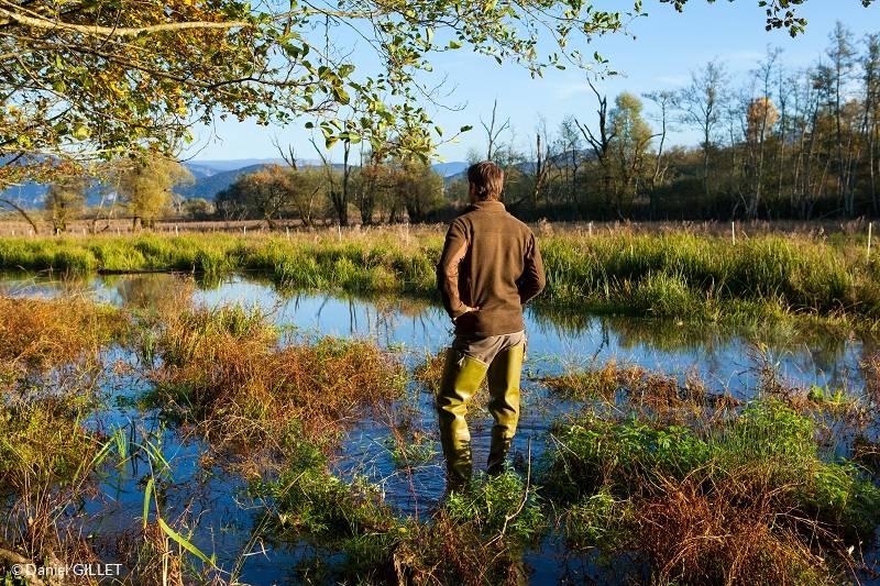 Promenade dans le Marais de Lavours, Ceyzérieu, Bugey,