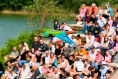 Spectacle d'oiseaux en vol au Parc des Oiseaux