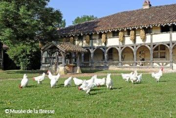 Volaille de Bresse au Domaine des Planons à Saint-Cyr-sur-Menthon