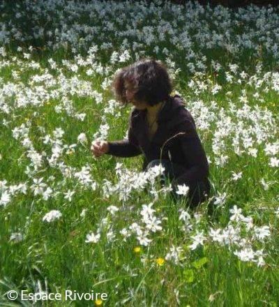 Cueillette des narcisses à l'Espace Rivoire