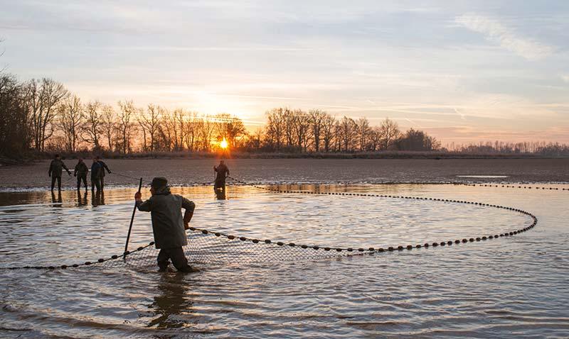 Pêche en étang : Poissons de Dombes