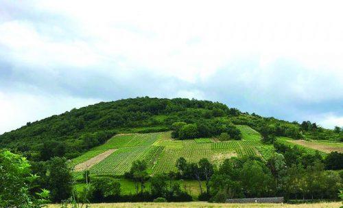 Vignoble de Gravelles, Saint Martin du Mont, Revermont